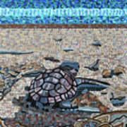 Bald Head Island, Loggerhead Sea Turtle Poster