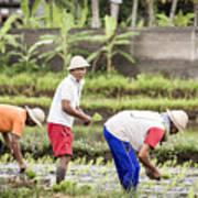 Bali Farming Poster