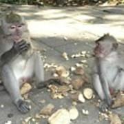 Balinese Monkeys Eating Poster