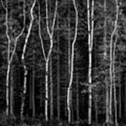 Ballysallagh Forest Mono Poster