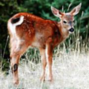 Bambi Poster