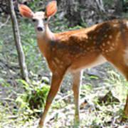 Bambi1 Poster