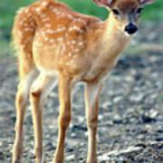 Bambi2 Poster