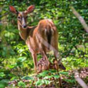 Bambi's Mom Poster