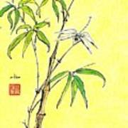 Bamboo And Dragonfly Poster