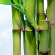 Bamboo And Sky Poster