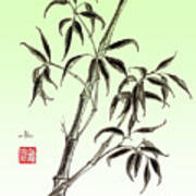 Bamboo Drawing  Poster