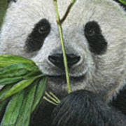 Bamboo Foodie Poster