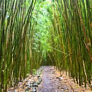 Bamboo Forest Trail Hana Maui 2 Poster