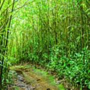 Bamboo Forest Trail Poster