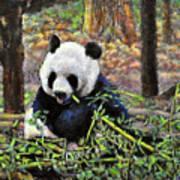 Bamboo Loving Poster