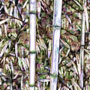 Bamboo Stalks Poster