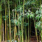 Bamboo Wind Chimes  Waimoku Falls Trail  Hana  Maui Hawaii Poster