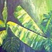 Banan Leaf Poster by Carol P Kingsley