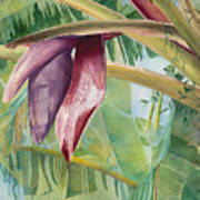 Banana Flower Poster by AnnaJo Vahle