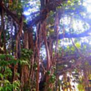 Banana Tree Poster