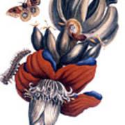 Bananas (musa Paradisiaca): Poster