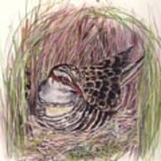 Banded Rail Poster