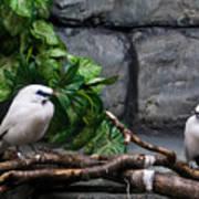 Bandit Birds Poster