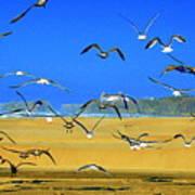 Bandon Gulls Poster