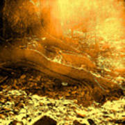 Banishing Rain Forest Shadows Poster