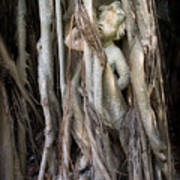 Banyan Grows Over Statue Poster