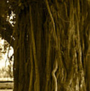 Banyan Surfer - Triptych  Part 1 Of 3 Poster