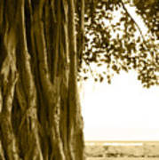 Banyan Surfer - Triptych  Part 2 Of 3 Poster