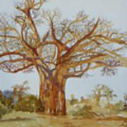 Baobab Tree Of Africa Poster