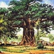Baobab Tree - South Africa Poster