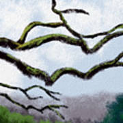 Bare Tree Branches Poster