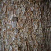 Bark 2 Poster