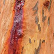 Bark Kc05 Poster