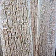Bark, Moringa Tree Poster