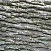 Bark Poster