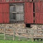 Barn And Sheep Poster
