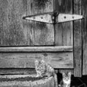Barn Cats Poster
