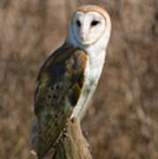 Barn Owl 2 Poster