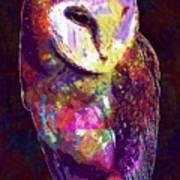 Barn Owl Bird British Nature  Poster