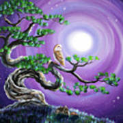 Barn Owl In Twisted Pine Tree Poster