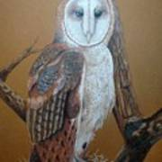 Barn Owl On Tree Poster