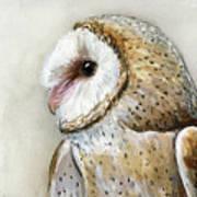 Barn Owl Watercolor Poster