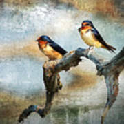 Barn Swallows Oil Poster