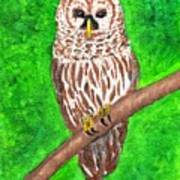 Barred Owl 08-18-2015 Poster