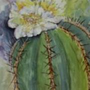 Barrel Cactus In Bloom Poster