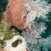 Barrell Sponges And Sea Fans Poster