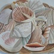 Basket Of Shells Poster