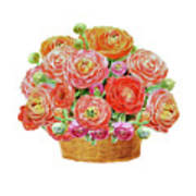 Basket With Ranunculus Flowers Watercolor Poster