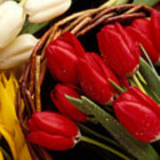 Basket With Tulips Poster