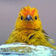 Bath Time Finch Poster